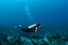 Scuba diver Stock Image
