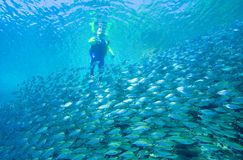 Scuba Diver. A scuba diver entering the water near a school of fish. The divers brightly colored wetsuit is reflected on the surface Stock Photo