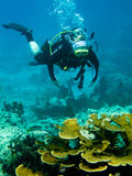 Scuba Diver And Coral Reef Stock Images