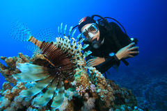Free Scuba Diver And Lionfish Stock Photos - 11360243