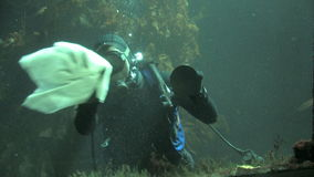 Scuba diver cleaning aquarium stock video footage