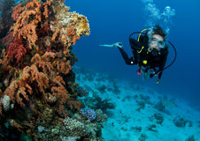 Scuba diver close to soft coral Royalty Free Stock Photo
