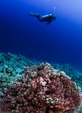 Scuba diver on coral reef Stock Photo