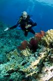 Scuba diver on coral reef stock photos