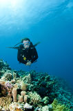 Scuba diver on coral reef. Male scuba diver swims on coral reef Stock Photo