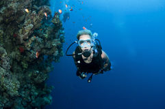 Scuba diver and coral reef. Underwater view of male scuba diver swimming past tropical fish and coral reef in blue sea Stock Photos