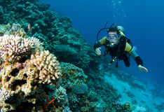 Scuba diver and coral reef. Male scuba diver underwater next to coral reef in blue sea Royalty Free Stock Images