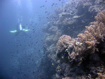 Scuba diver and coral reef. Rear view of scuba diver swimming past shoal of fish and coral reef Royalty Free Stock Photo