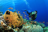 Scuba Diver and coral reef Stock Image