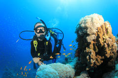 Scuba Diver and coral reef Stock Photos