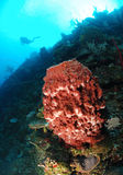 Scuba diver and coral reef. Giant sponge in coral reef with scuba diver in background, Roatan, Bay Islands, Caribbean Stock Photography