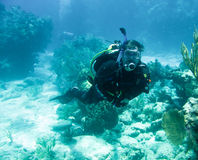 Scuba diver and coral reef. Underwater view of scuba diver swimming over coral reef off Florida Keys, America Stock Photography