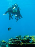 Scuba diver and coral reef. Underwater view of scuba diver swimming over coral reef off Florida Keys, America Royalty Free Stock Photos