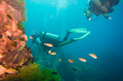 Scuba Diver on coral reef in clear blue water Stock Photos