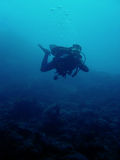 Scuba diver coral reef philippines