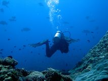 Scuba diver on a deep dive. Diver entring the divesite canyons Stock Photography