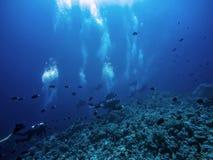 Scuba diver descending to the bottom royalty free stock photography