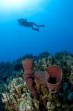 Scuba diver on a dive Royalty Free Stock Photos