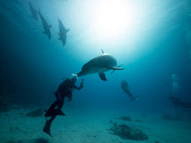 Scuba diver Dolphin kiss Royalty Free Stock Image