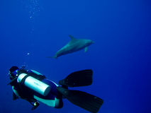 Scuba Diver Dolphin underwater encounter Stock Photography