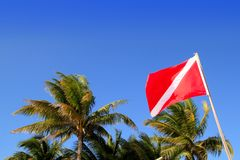 Scuba diver down flag tropical palm trees blue sky Stock Photos