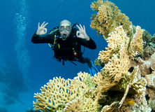 Scuba Diver Drifts Over Reef Stock Photo
