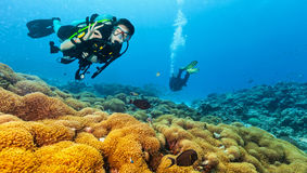 Scuba diver explore a coral reef showing ok sign. Female scuba diver showing ok sign, explore beautiful coral reef. Underwater photography in Indian ocean royalty free stock photo