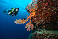 Scuba diver explore a coral reef showing ok sign Stock Photography