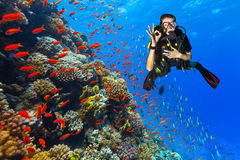 Scuba diver explore a coral reef showing ok sign Royalty Free Stock Image