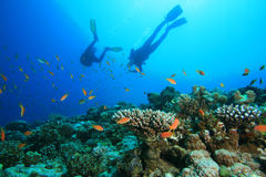 Scuba Diver explores Beautiful Coral Reef Stock Photography
