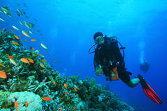 Scuba Diver explores Beautiful Coral Reef royalty free stock photography
