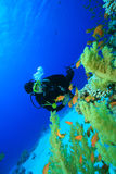 Scuba Diver explores coral reef Stock Images