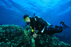 Scuba Diver explores coral reef Royalty Free Stock Image