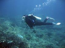 scuba diver explores coral reef philippines stock photos