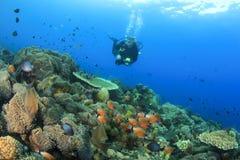 Scuba Diver explores coral reef Stock Image