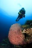 Scuba Diver explores coral reef Royalty Free Stock Photos