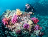 Free Scuba Diver Exploring A Reef  Stock Photography - 157570452