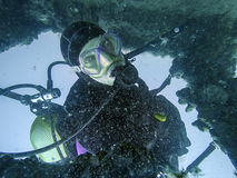 Scuba diver exploring the inside underwater shipwreck Stock Image