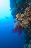 Scuba diver exploring a tropical coral reef stock images
