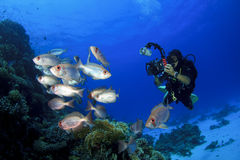 Scuba Diver and Fish Royalty Free Stock Image