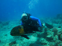 Scuba diver and fish Stock Images