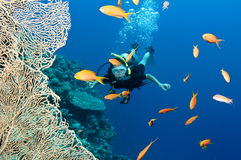 Scuba diver with fish and coral Stock Photo