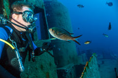 A scuba diver and fish on a wreck Royalty Free Stock Images