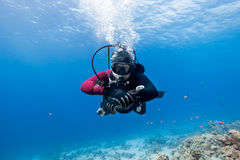 Scuba diver floating over coral reef in the Red Sea and looking Royalty Free Stock Photos