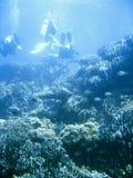 Scuba diver group lesson Royalty Free Stock Photos