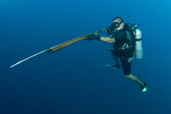 Scuba diver with Harpoon gun. Spear fishing on scuba in clear blue water Royalty Free Stock Image