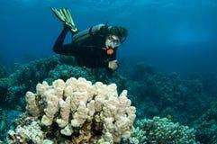 Scuba diver having fun Stock Photo
