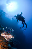 Scuba diver and lionfish Stock Image