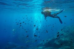 Scuba diver look at shoal of fish underwater sea. Scuba diver on water surface look at shoal of fish underwater, Mediterranean sea, Medes Islands, Costa Brava stock photo