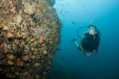 Scuba diver looking at coral Stock Images